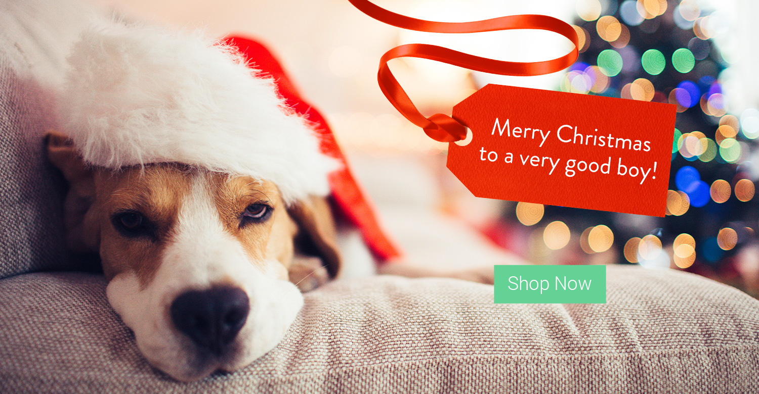 Christmas Dog Costumes - fancydogs.co.uk