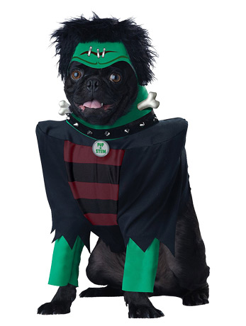 Pug dressed in frankenstein costume